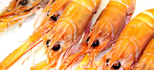 products-international-scampi